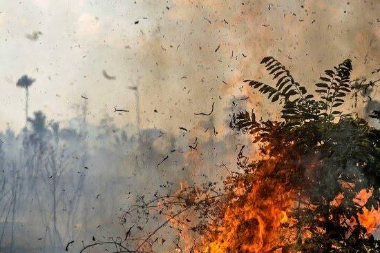 Os brigadistas do Ibama convidaram a reportagem doEstadopara acompanhar o combate às chamas na Amazônia
